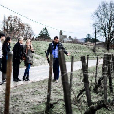 rustice vine wine tours